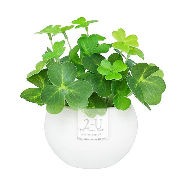 CT触媒观赏植物 绿色幸运草